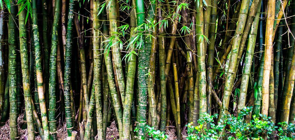 bamboe rolgordijn